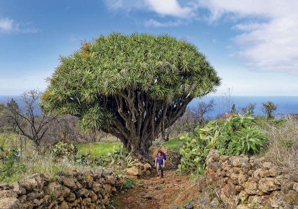drago centenario isla bonita tours