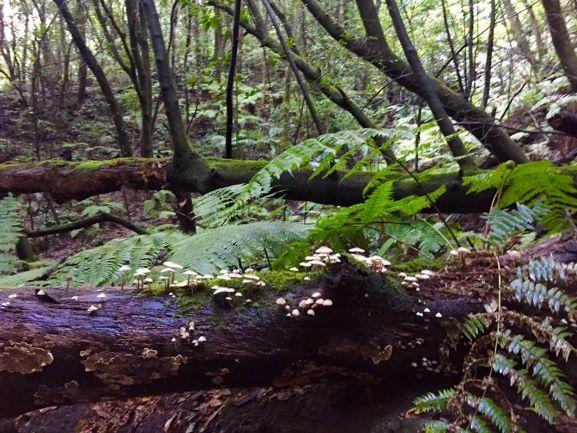 bosque islas canarias