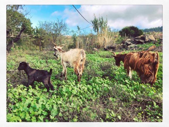 isla bonita tours cabras