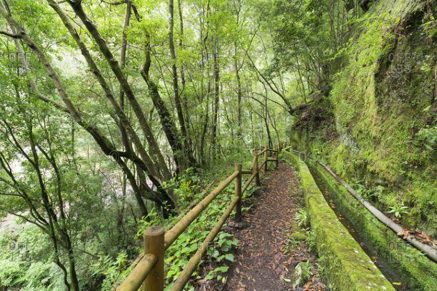 tilos canal agua bosque laureles isla bonita tours