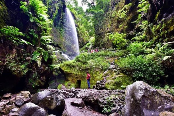 tilos cascada bosque laureles isla bonita tours