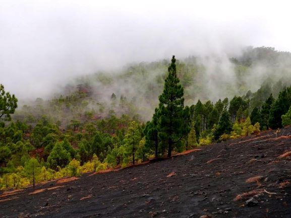 volcan pinos isla bonita tours